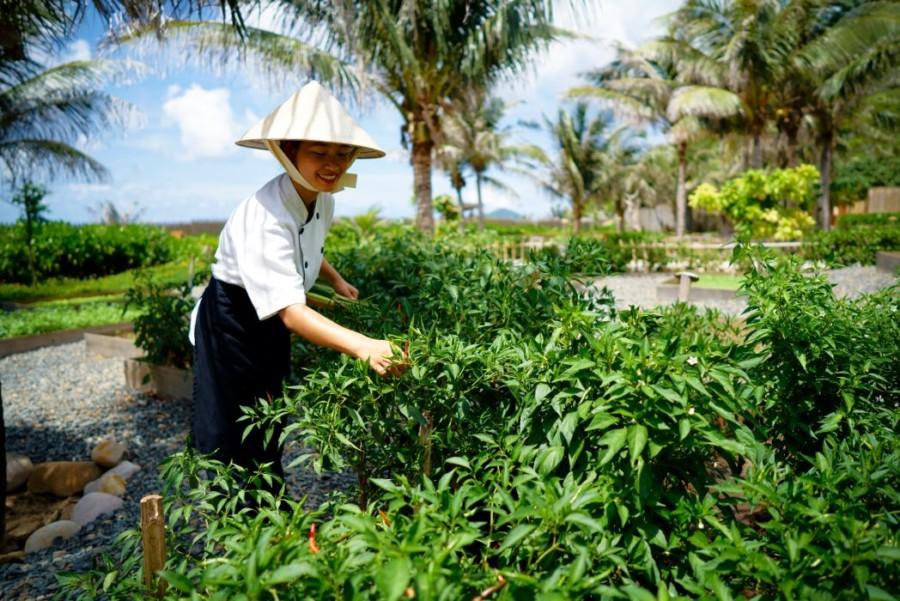 SSCD_Organic_Garden