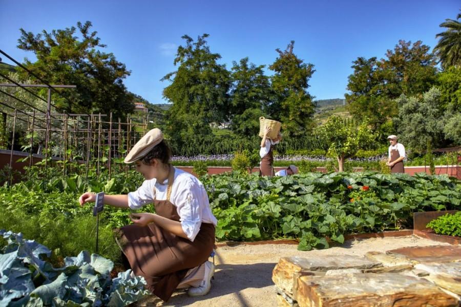 SSDV_Organic_Garden