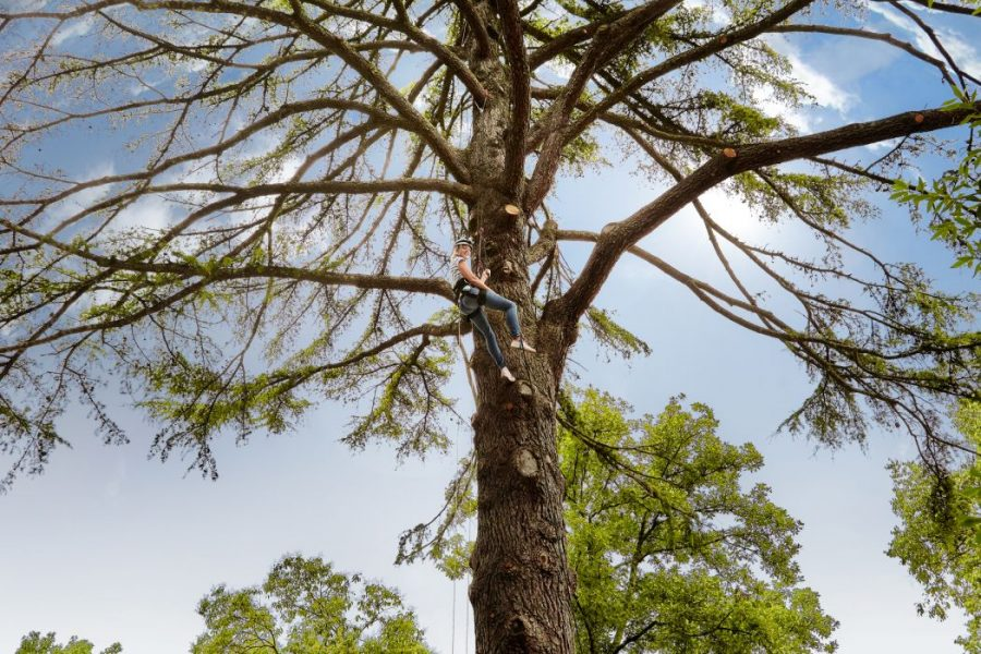 SSDV_tree_climingg