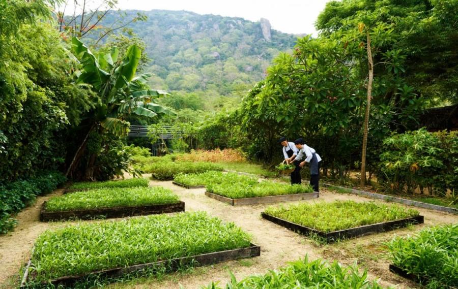 SSNVB_organic_garden