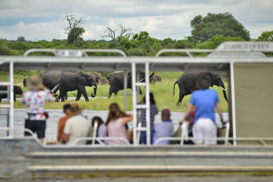 Zambezi Queen game viewing boat cruise