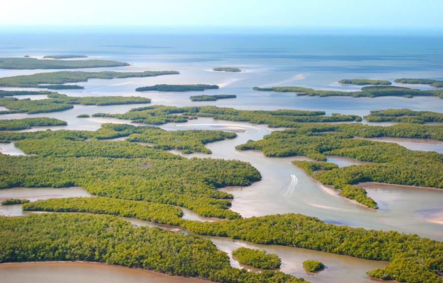 Auf du und du mit der Seekuh Manatee Ausflug zu Wasser und weitere Erlebnisse
