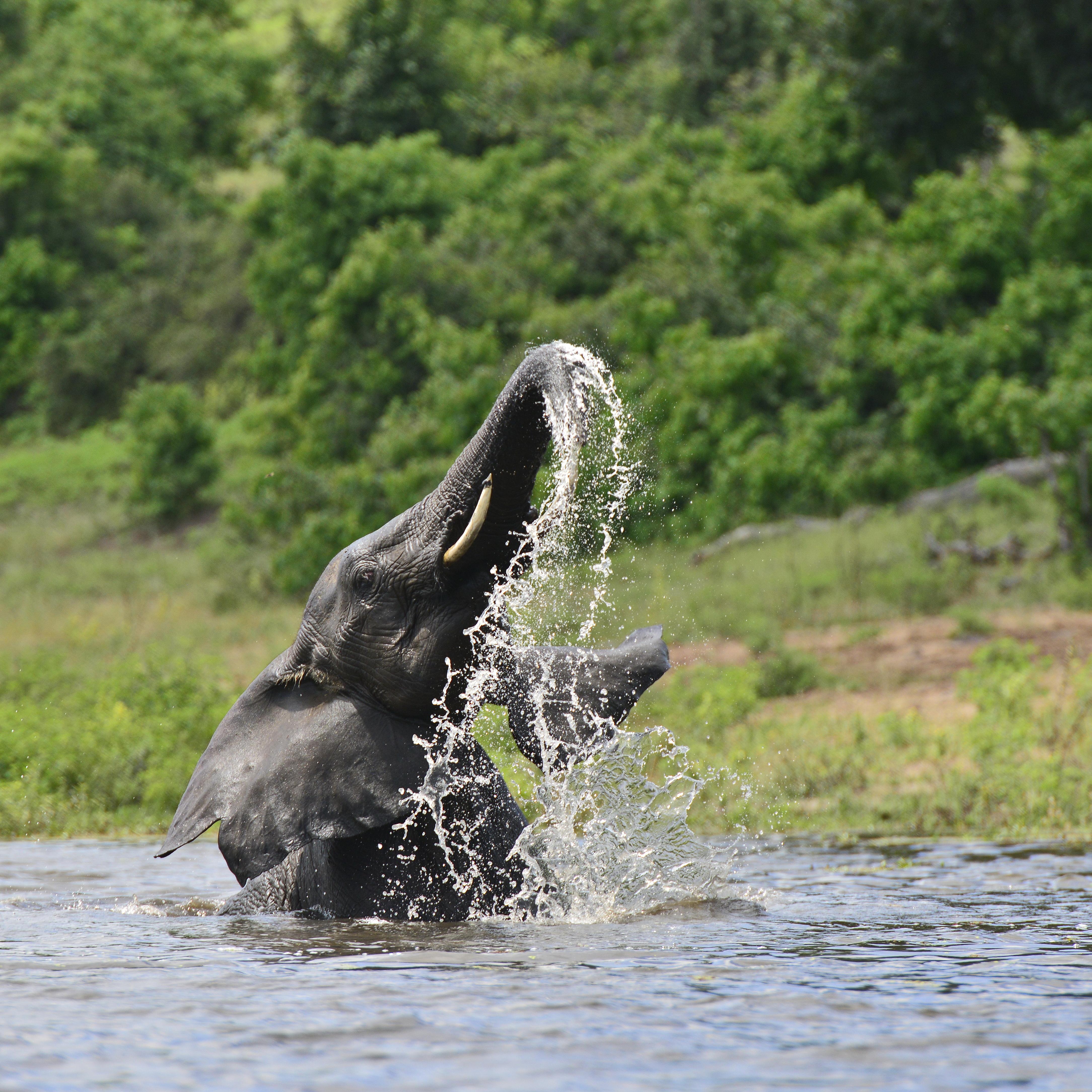 Als Elefant Tayo die Menschen entdeckt Die Zambezi Queen aus Sicht eines tierischen Park-Bewohner