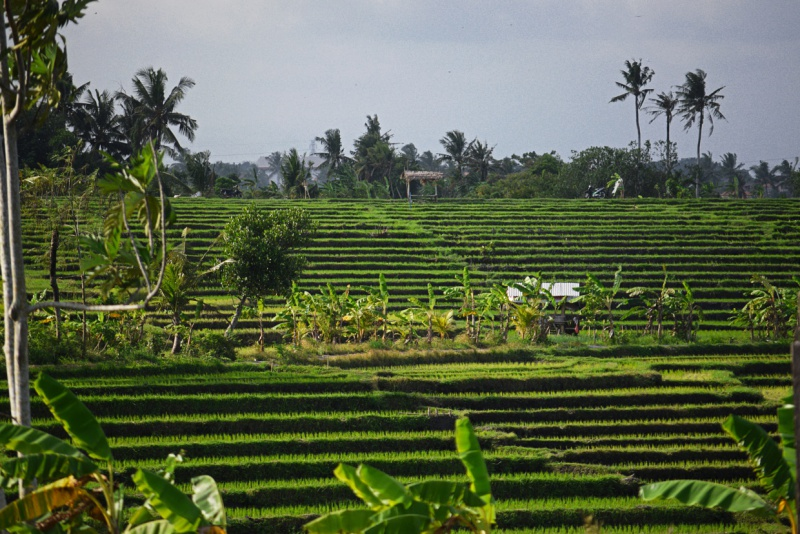 Six-Senses-Uluwatu-rice-field