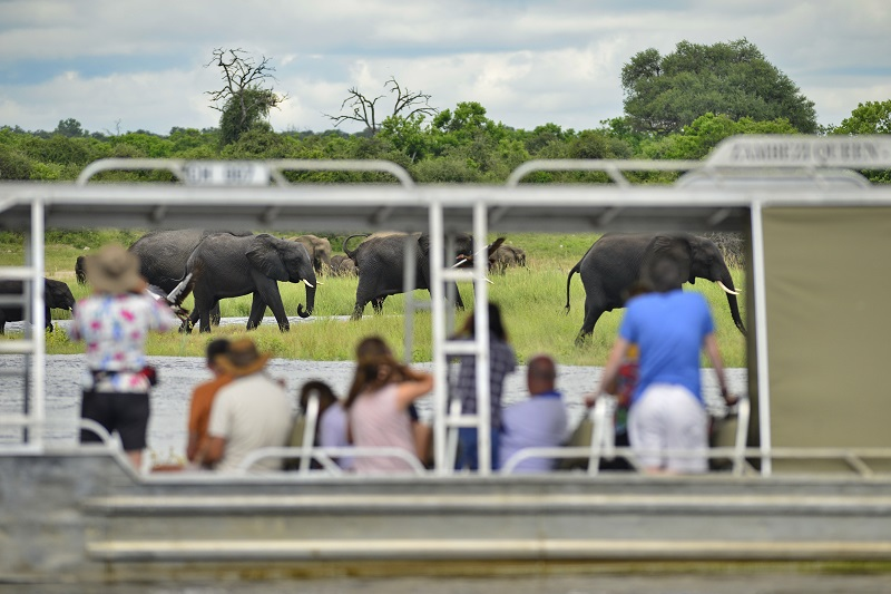Zambezi-Queen-game-viewing-boat-cruise