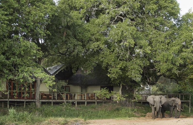 Tintswalo-Safari-Lodge-Elefants