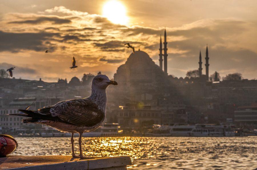 Six-Senses-Kocatas-Istanbul-seagull