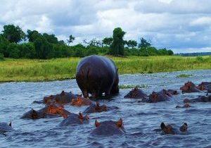 ZQ_Hippo (2)